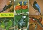 Postcard - Palmitos Park, Gran Canaria. A - Birds