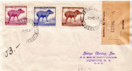 Postal History Cover: Paraguay Tapir Stamps On R Cover - Stamps