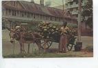 Tinidad : Coconut Vendor - Port Of Sapin - (vendeur De Noix  De Coco (métiers) - Trinidad