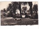 25037 Var Porquerolles -deux Cpsm, 2156 Vue Generale- 1754 Palmiers -Mar Mazella Papeterie -ane Monkey - Porquerolles