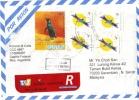 16C: Argentina Bird, Penguin, Bird ,REGISTERED Stamp On Cover - Argentina