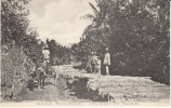 Guam Road Building, C1900s Vintage Albertype Postcard - Guam