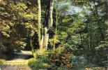 [DC4217] CARTOLINA - STRADA NEL BOSCO CON PONTICELLO SUL FIUME - Viaggiata 1900 - Old Postcard - Cartoline