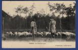 40 Un Instant De Repos ; Moutons, échasses, Bergers - Animée - Non Classés