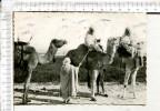 Collection   Saharienne  -    Les   Rekkas    S Apprêtent   Pour Une   Longue  étape - Sahara Occidental