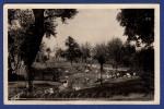 03 VICHY Les Parcs Et Le Nouveau Bassin Des Cygnes - Vichy