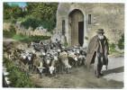 Saint Didier ??? (84) CPSM Gf - Vieux Berger Provençal - Sonstige Gemeinden
