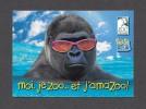ANIMALS - ANIMAUX - SINGE - GORILLE - MONKEY - MOI JE ZOO ET JAMAZOO ! - ZOO GRANBY - Oiseaux