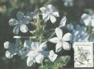 South Africa-Bophuthatswana 1987 Wildflowers, Plumbago Auriculata, Maximum Card - Bophuthatswana