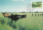 South Africa-Transkei 1985 Soil Conservation, Cattle Garzing On Verdant Plain, Maximum Card - Transkei