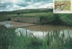 South Africa-Transkei 1985 Soil Conservation, Regenaration Of Vegetation, Maximum Card - Transkei