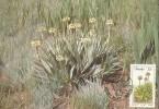 South Africa-Transkei 1986 Aloe, Aloe Ecklonis, Maximum Card - Transkei