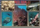 RED SEA (Ägypten) - Underwater Paradise, Sondermarke, Transportspuren - Ägypten