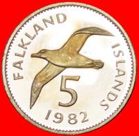 ★ALBATROSS: FALKLAND ISLANDS ★ 5 PENCE 1982! PROOF! LOW START★ NO RESERVE - Falkland Islands