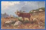 Tiere; Rentier; Ren; Caribou; Reindeer; Renne; Künstlerkarte - Animaux & Faune