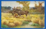 Tiere; Rentier; Ren; Caribou; Reindeer; Renne; Künstlerkarte; 1926 - Tierwelt & Fauna