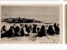 URUGUAY PUNTA DEL ESTE SEALS ISLAND PHOTO TARJETA POSTAL  Ca1900 POSTCARD Cpa Ak (W4_1640) - Uruguay