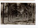 URUGUAY ARTIGAS TREE NURSERY GARDEN PHOTO TARJETA POSTAL  Ca1900 POSTCARD Cpa Ak (W4_1646) - Uruguay