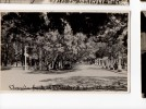 URUGUAY  ATLANTIDA SUPERB REAL PHOTO TARJETA POSTAL  Ca1930 POSTCARD Cpa Ak (W4_1652) - Uruguay