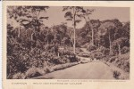 CAMEROUN---route Des Environd De Yaoundé---voir 2 Scans - Cameroon