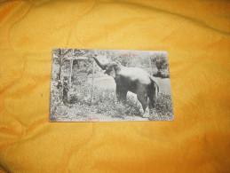 CARTE POSTALE ANCIENNE CIRCULEE DE 1910. / CEYLON.- ELEPHANT. / CACHETS + TIMBRE - Sri Lanka (Ceylon)