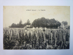 AVENAY  (marne)  :  Le  VIGNOBLE   XXX   1918 - Other Municipalities