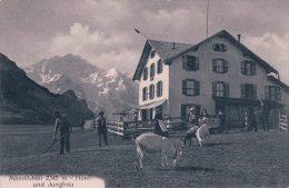 Männlichen, Chèvres Devant L'Hôtel (8472) - FR Fribourg