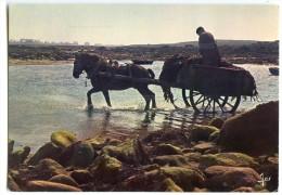 Travail De La Mer En Bretagne - Ramassage Du Goémon - écrite Non Timbrée - 2 Scans - France