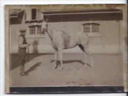 Photo Jument   Yakoba Courses 1934 - Other