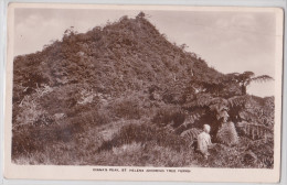 Île Sainte-Hélène - Saint Helena Island - Diana's Peek (showing Tree Ferns) - Sainte-Hélène