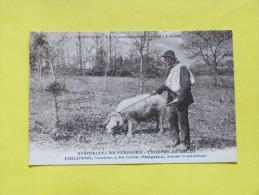 SPECIALITE DU PERIGORD. TRUFFES AU CACAO.   PHILIPPON CHOCOLATIER A PERIGUEUX - Périgueux
