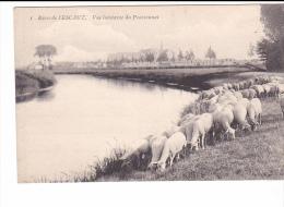 25165 Rives De L´ESCAUT -Belgique- Vue Lointaine Du Pensionnat -1 Ed ? -mouton - Elevage
