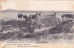 CPA 40 @ Troupeau De Vaches Dans Le Grand Marais De Gascogne Dans Les Landes - La Côte D'Argent @ Guillier éditeur - Frankrijk