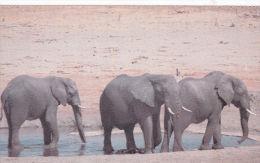ZIMBABWE - ELEPHANTS AT WATERHOLE - Elephants