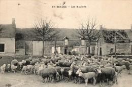 EN BEAUCE - Les Moutons - France