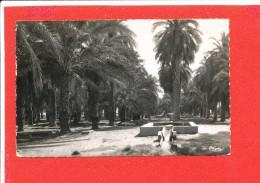 TOUGGOURT Cpsm Palmeraie                  Edit Combier - Argelia