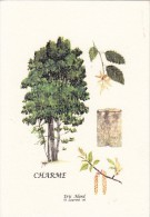 CHARME  Par Eric  ALARD  - Jolie Carte - Árboles