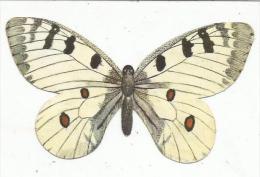 CHROMOS DECOUPIS - CAFE SANRIVAL - PAPILLON PARNASSIEN PHOEBUS - Animals