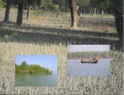 UNESCO World Heritage - Site UNESCO Bangladesh - The Sundarbans - Bangladesh