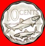 ★SHIP & FISHES: BAHAMAS ★ 10 CENTS 2007 UNC! LOW START★NO RESERVE!!! - Bahamas