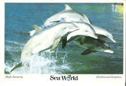 High-Jumping  Bottlenosed Dolphins, Sea World, San Diego, California - San Diego