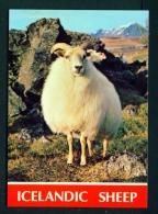 ICELAND  -  Icelandic Sheep  Unused Postcard As Scan - Iceland