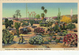 Varietes Of Desert Vegetation, Seen Near Palm Springs, California - Palm Springs