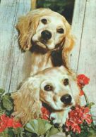 DOGS / HUNDE / CHIENS /  -     Postcard  Unused  ( P 3054  ) - Hunde
