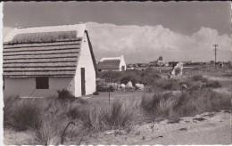 13---SAINTES MARIES DE LA MER---cabanes Des Guardians---voir 2 Scans - Saintes Maries De La Mer