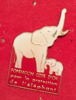ANIMAUX ELEPHANT FONDATION COTE D OR - Dieren