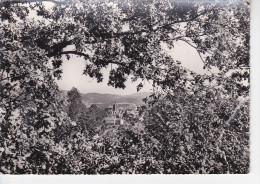 AMBERT (63-Puy-de-Dôme), L'Eglise Vue Du Bois De Boulogne, Ed. Combier, 1961 - Ambert