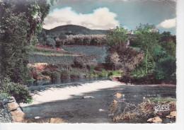 AMBERT (63-Puy-de-Dôme), Vallée De La Dore, Vue Pittoresque De La Dore Entre Vertolaye Et Ambert, Ed. G.d´O. 1960 Enviro - Ambert