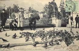- Pays Divers - Monaco - Ref E 241 - Monte Carlo - Jardin De Monte Carlo - Chameuse - Pigeons - Carte Bon Etat - - Monte-Carlo