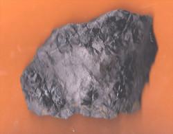 Fossiles Fragments De Calamites Géantes (prêle) Carbonifère Hérault (Bédarieux ) état Brut 11 X 8 X 0,5 Cm - Fossiles